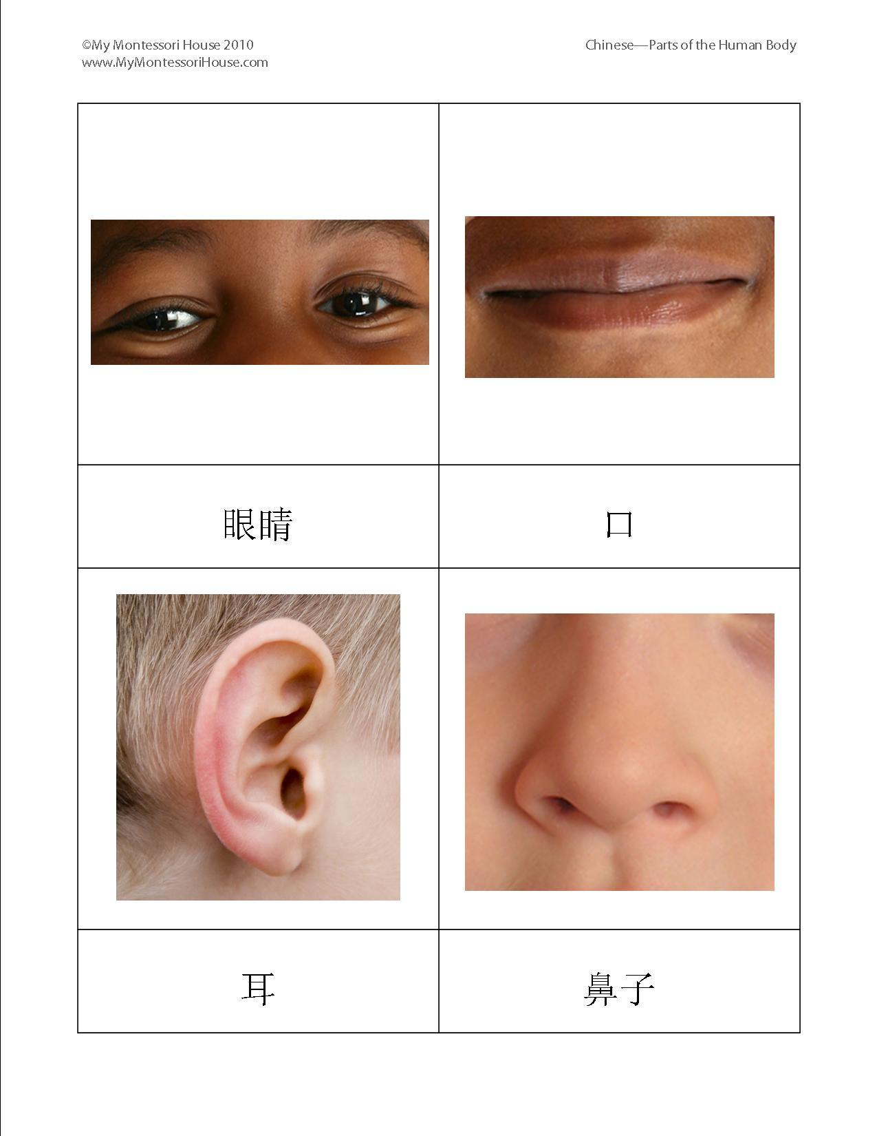 Esl Human Body