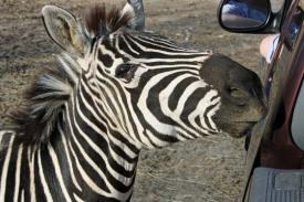 Briarwood Safari