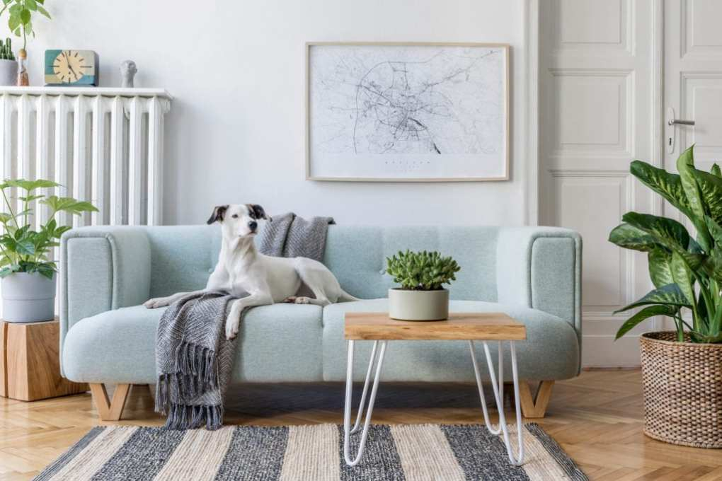 Living room with dog on sofa and map-style wall art
