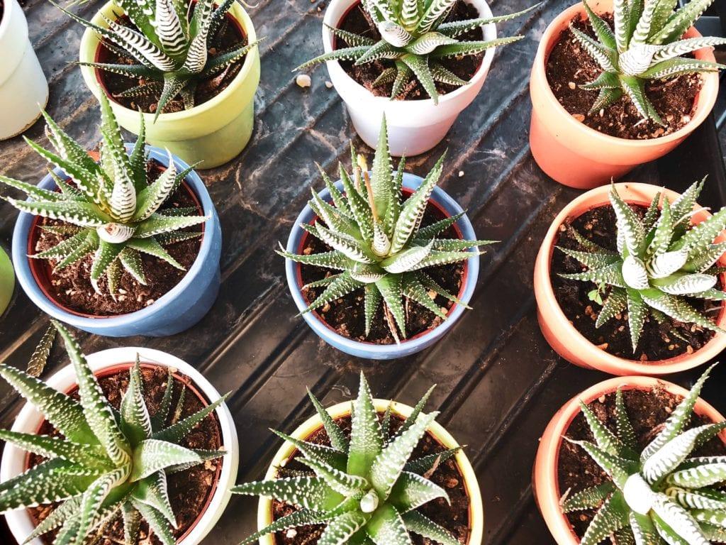 9 Easy Indoor Plants You Can Buy Online