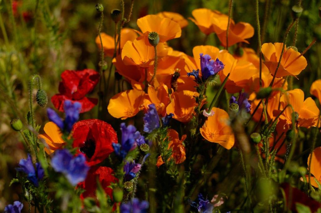 15 Cheap No Grass Backyard Ideas | MYMOVE on Cheap No Grass Backyard Ideas  id=75040