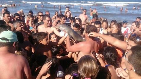 Touristes en Argentine qui prennent des selfies a avec un dauphin mort.