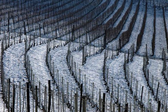 winter barbera winery