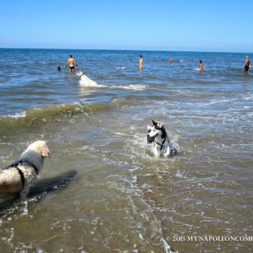 Bau Beach: A Beach for Dogs Near Rome
