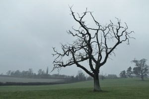 Bare Tree in damp Spring light, by Melanie Gow