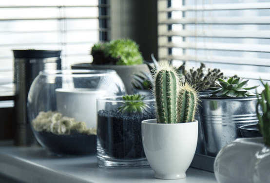 How to Remove the Odor and Fresh the Air in Your Office