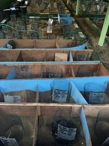 centre de protection des tortues de Sukamade