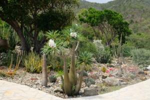 jardin botanique du désert à la Désirade