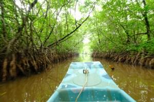 mangrove du parc national de Ream