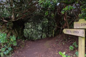 forêt d'Anaga