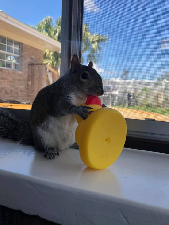 squirrel_1555000072407.jpg