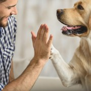 New Year's Resolutions: You, Your Pet, and 2018