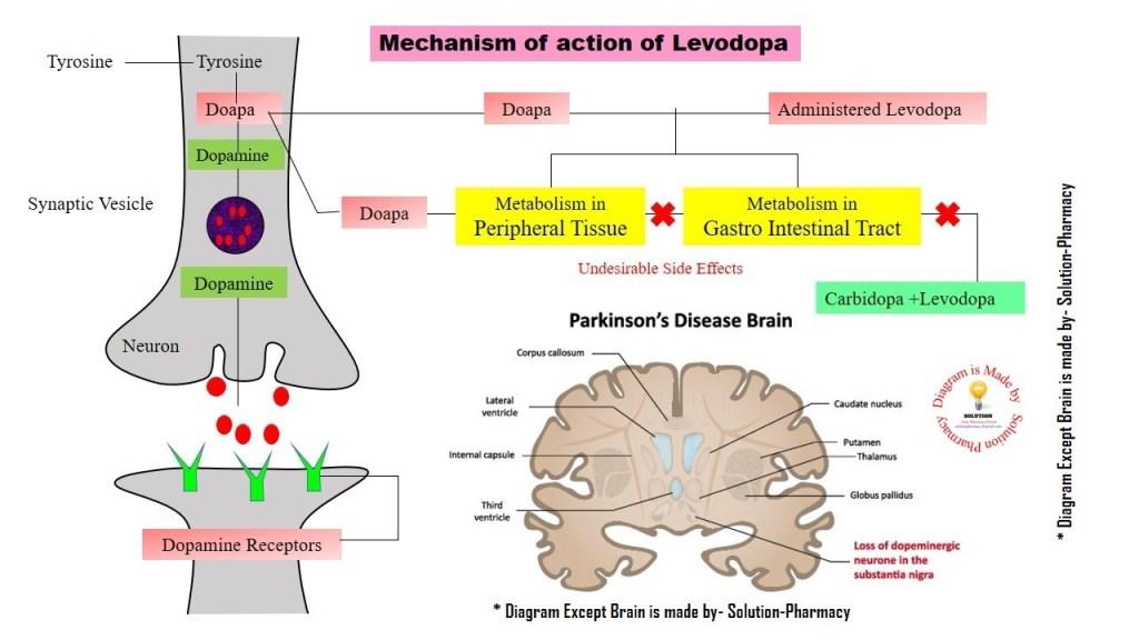 mechanism of levodopa on parkinson's disease
