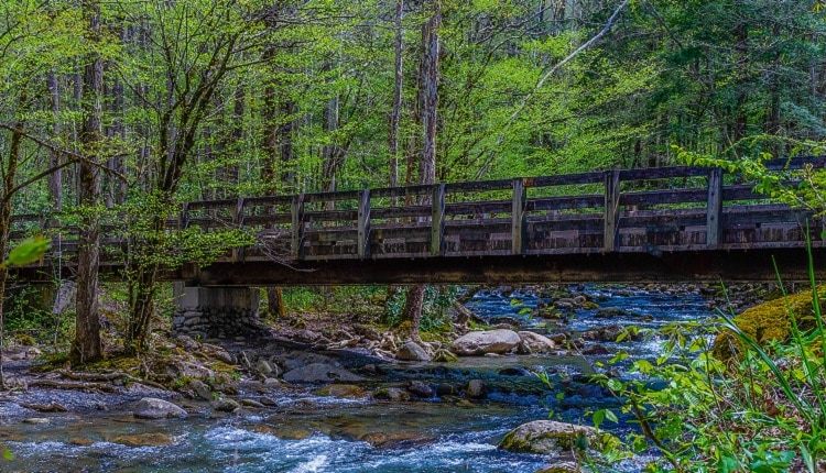 This is an intermediate hike along trillium gap trail. 4 Smoky Mountain Hiking Trails Perfect For Kids