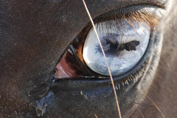 12 изумительных фактов о лошадях Удивительный Мир Животных