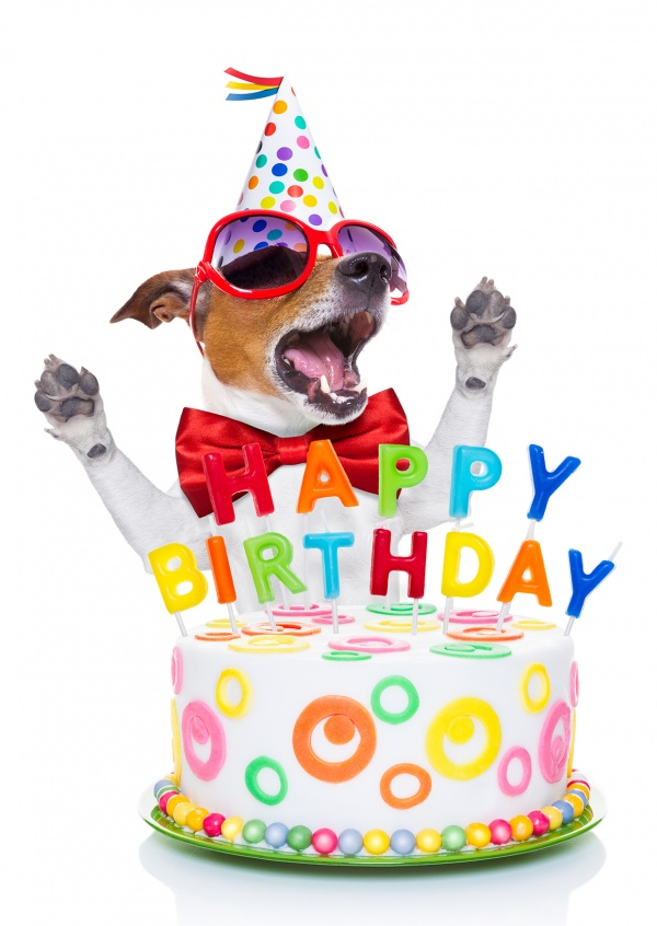 Doggy Birthday | Feliz Aniversário | Enviar online cartões ...