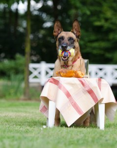 Take away doggie food from a leading restaurant