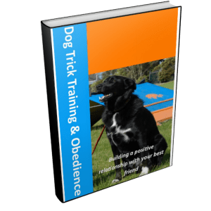 Obedience and Trick Training for Puppies