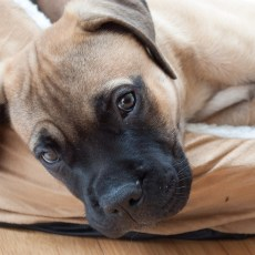 The Secret Behind Puppy Eyes and Facial Expressions