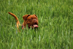 Protecting Your Dog From Nasties