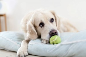 Questions To Ask Yourself About Your Dog's Health
