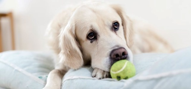Are you killing your dog with food?