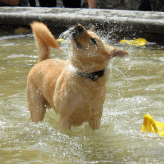 Keeping Your Pup Cool During Summer