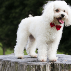 Wonder What To Name Your Dog? Find Inspiration From The Most Popular Dog Names of 2017