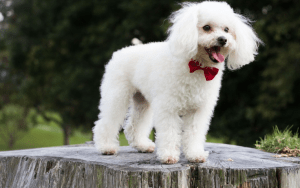 4 Dog Breeds Who Are Easy To Train