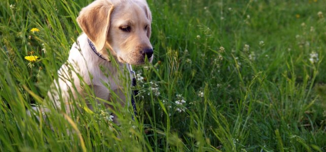 Tips for Building a Puppy Friendly Garden