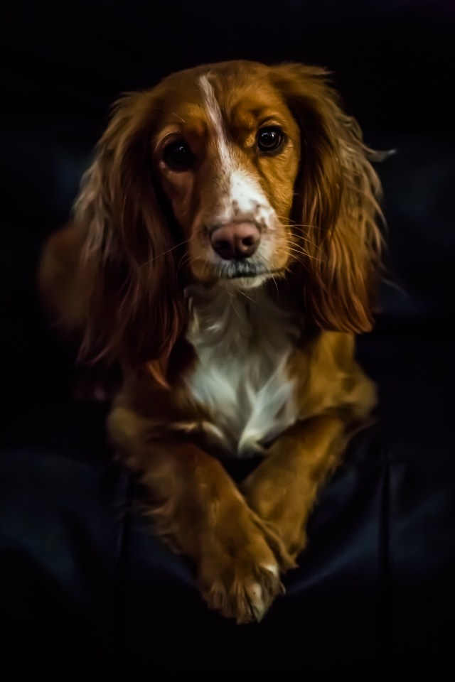 One of Emma's photos (an animal portrait of a dog)