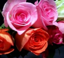 roses say I love you