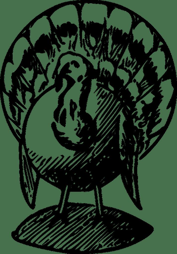 turkey-47753_1280