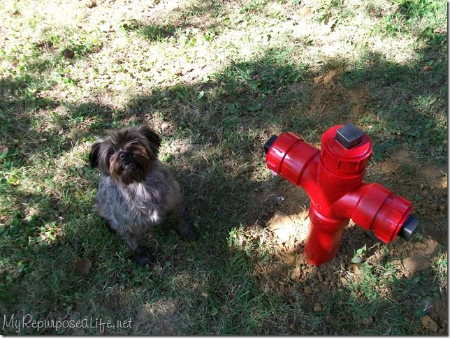 Diy Fire Hydrant My Repurposed Life 174 Rescue Re Imagine
