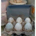 DIY Egg Shaped Soap by Rook No. 17