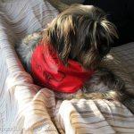(Fabric Ink) Dog Bandana