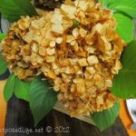 How to dye Hydrangeas {Rit Dye}