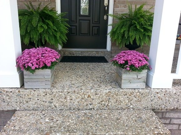 mums in rustic planters