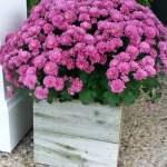 Easy Rustic Planter Koozies