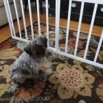 DIY Doggie Gate {crib rails} – eBook