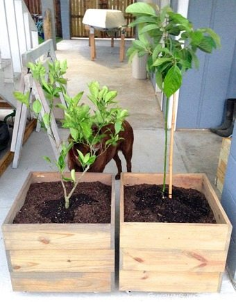 diy-planter-boxes