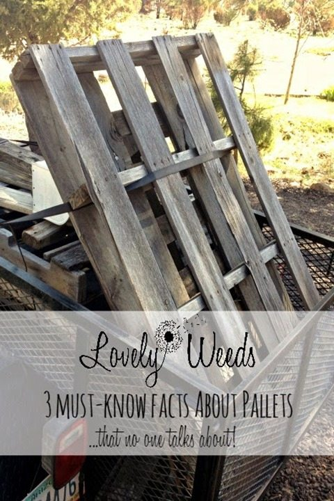Pallet Lessons-3-things-to-know