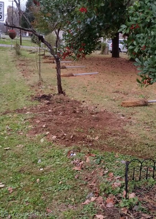 dig-up-bushes