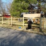 last picket in place   DIY Picket Fence
