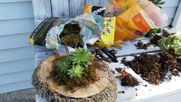 small wood slice succulent planter