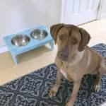 DIY Dog Bowl Holder