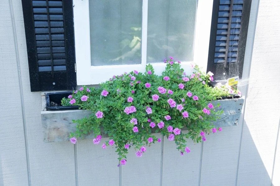 shed window flower box