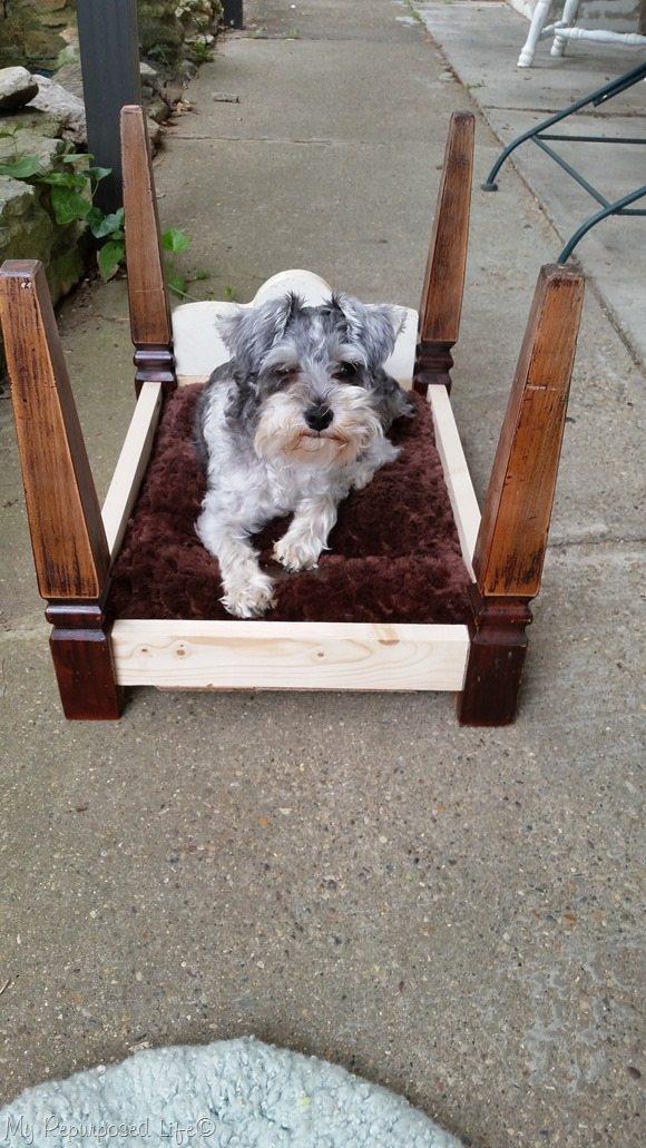 lulu mae testing new dog bed