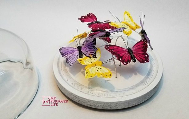 cheese cloche dome butterfly garden display MyRepurposedLife.com