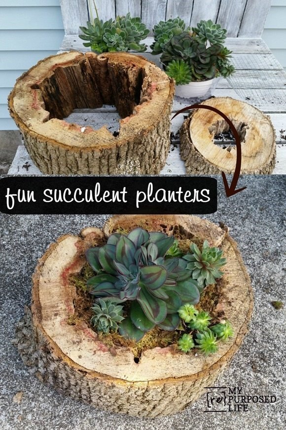 fun-succulent-planters-tree-trunks-MyRepurposedLife.com_
